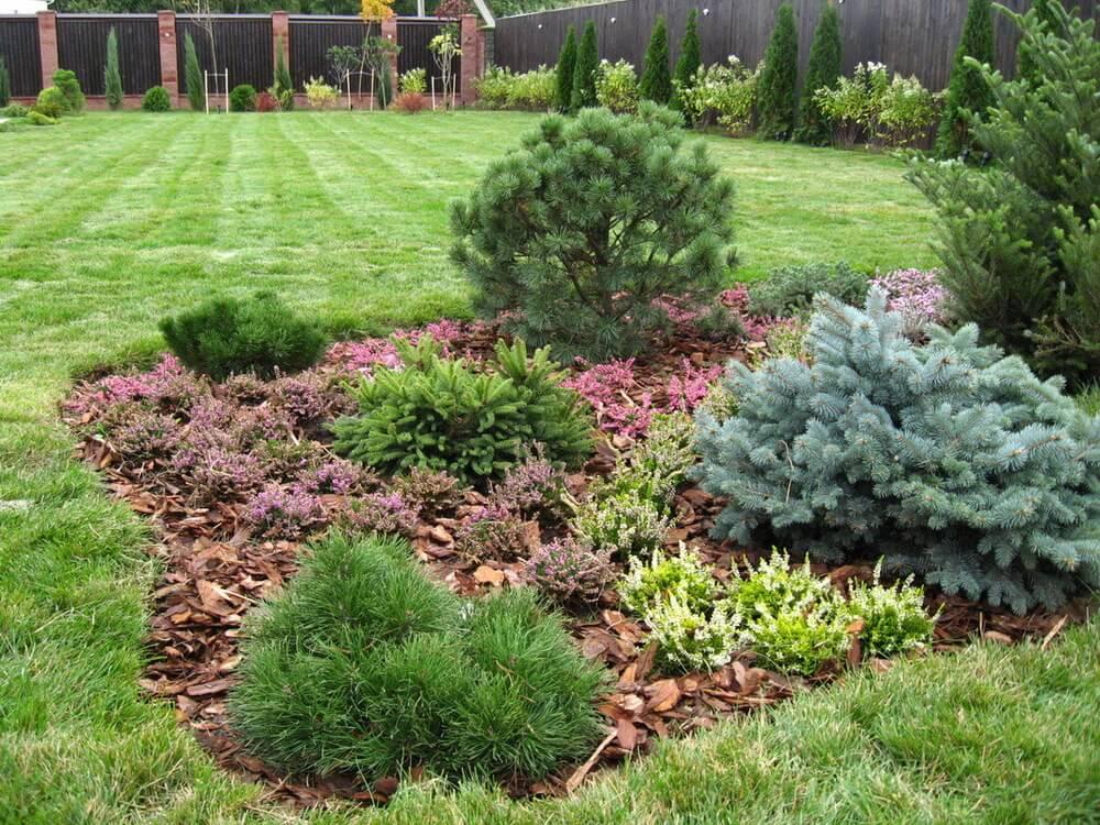 Растения с шаровидной формой кроны в ландшафтном дизайне и озеленении.
