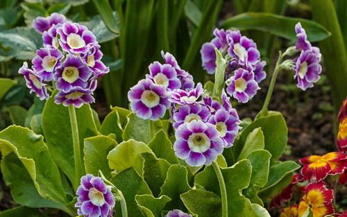 Растения для теневых садов.